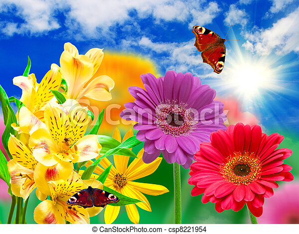 Flores de Gerber - csp8221954