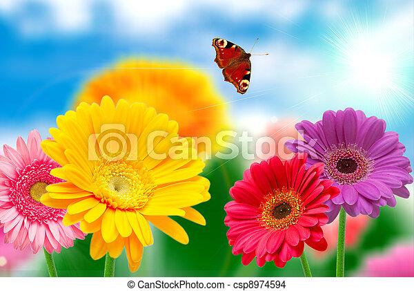 Flores de Gerber - csp8974594