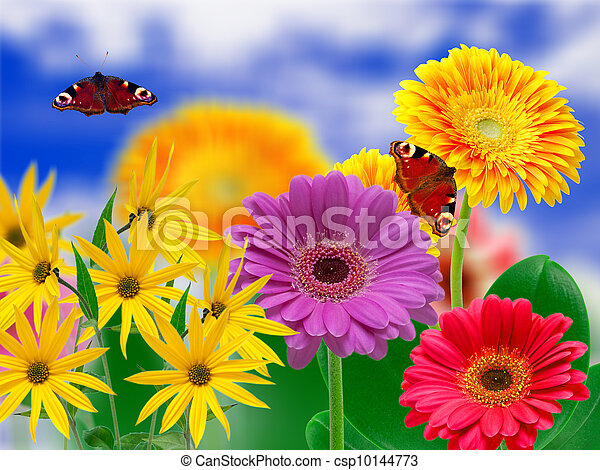 Flores de Gerber - csp10144773