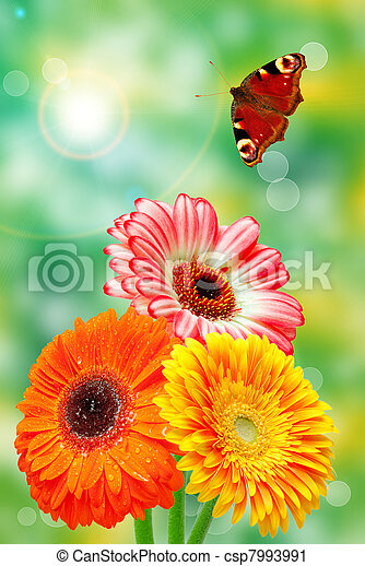 Flores Gerber - csp7993991