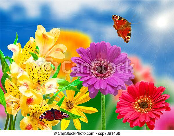 Flores Gerber - csp7891468