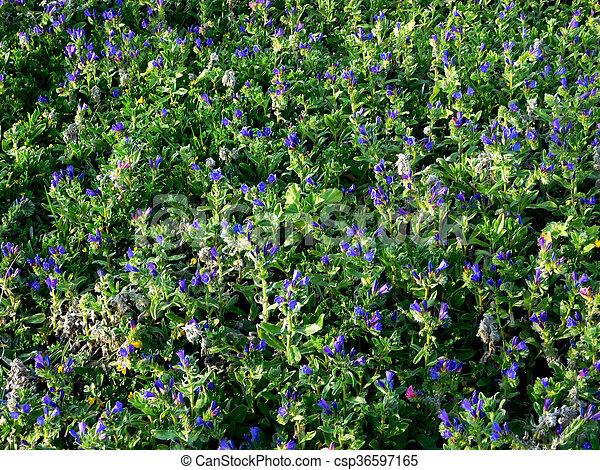 flores - csp36597165