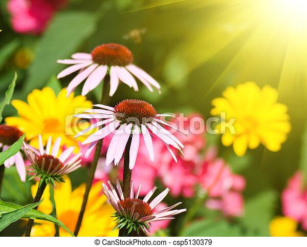Flores en un jardín - csp5130379