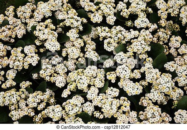 flores, jardim - csp12812047