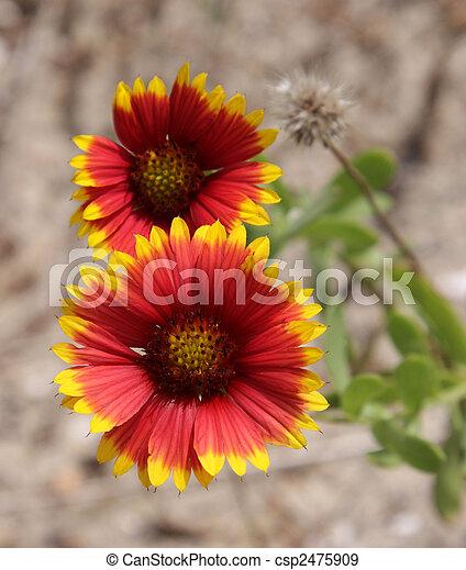 Flores de manta india - csp2475909