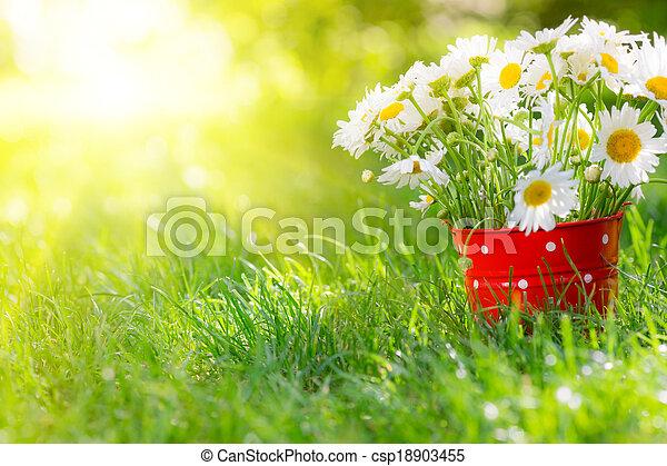 flores mola - csp18903455