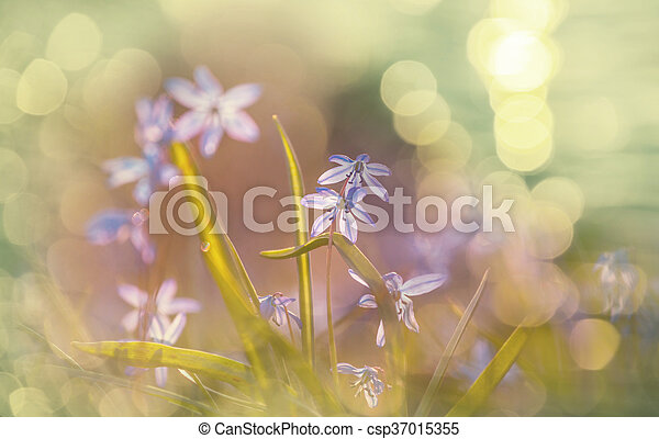 flores mola - csp37015355