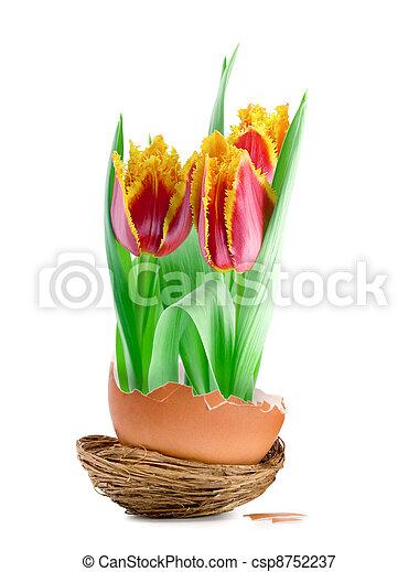 flores mola - csp8752237