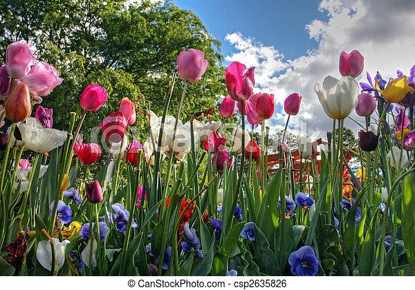 stock de fotos flores primavera