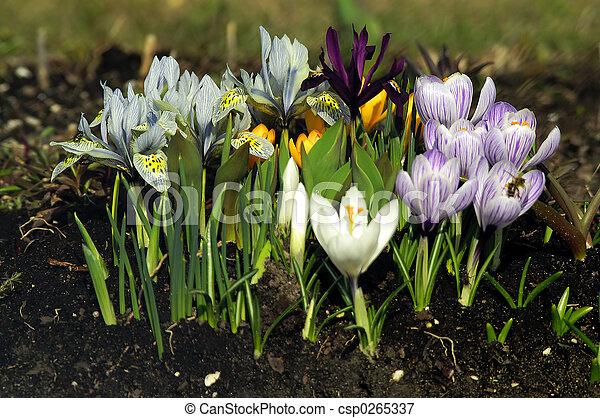 flores - csp0265337
