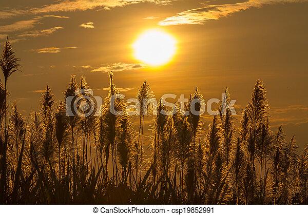 Flores al amanecer - csp19852991