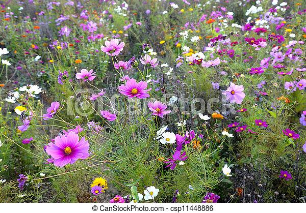 Flores silvestres - csp11448886