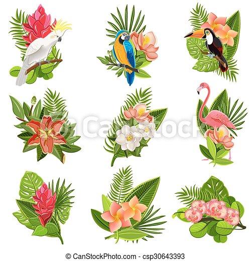 Flores Tropicales Conjunto Aves Pictograms Exotico Hermoso