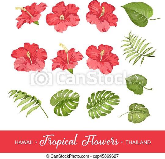 Flores Tropicales Conjunto Elementos Hibisco Conjunto Elements