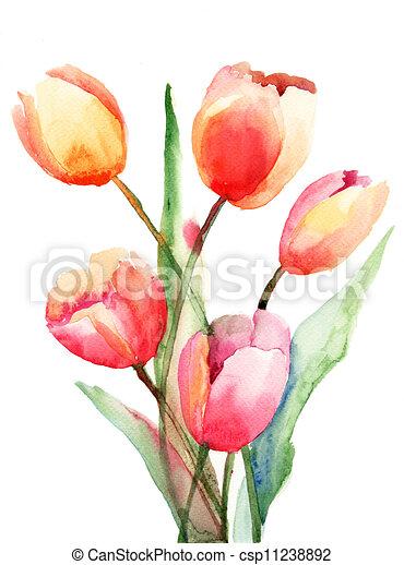flores, tulips, pintura aquarela - csp11238892