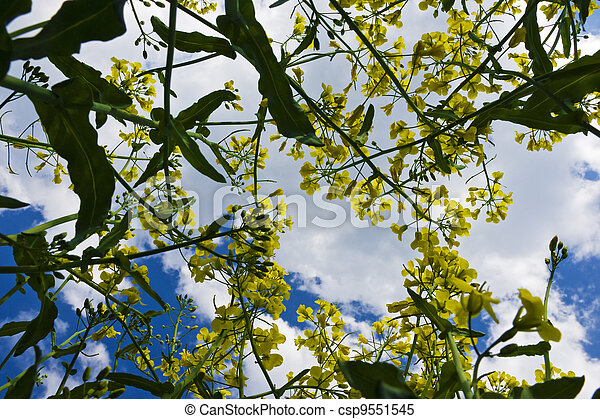flores, violación - csp9551545