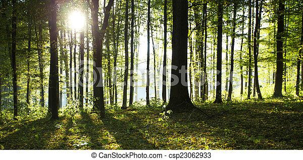 floresta - csp23062933