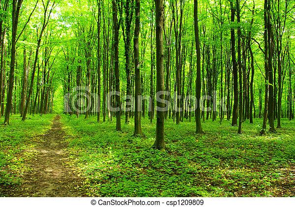 floresta - csp1209809