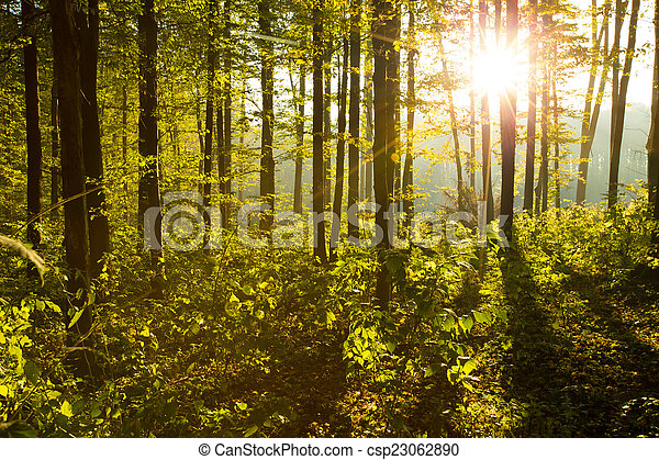 floresta - csp23062890