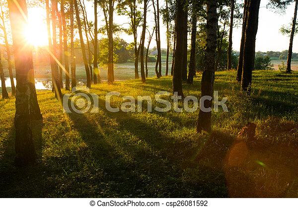 floresta - csp26081592