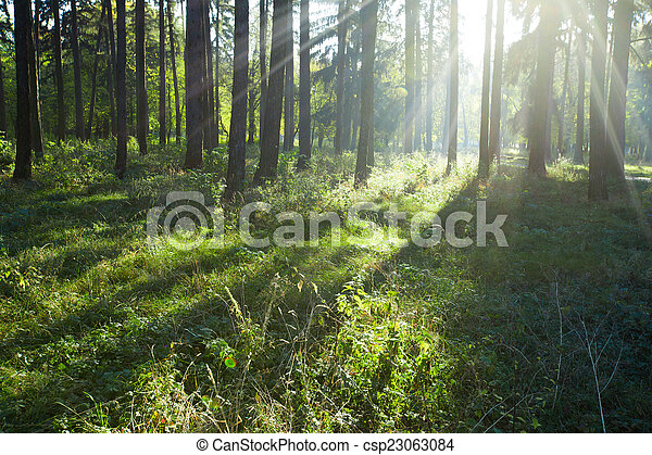 floresta - csp23063084