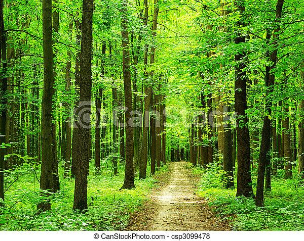 floresta - csp3099478