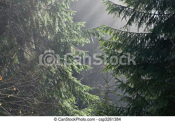 floresta nebulosa, manhã - csp3261384