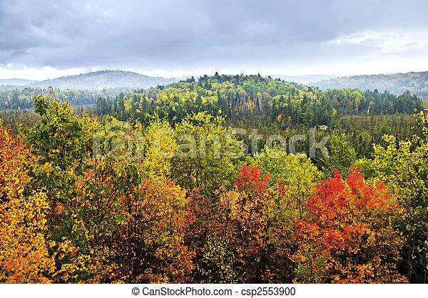 floresta, outono - csp2553900