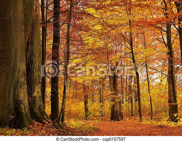 floresta outono - csp0157597