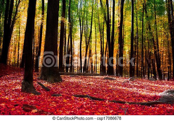 floresta outono - csp17086678