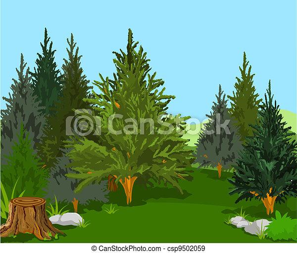 floresta, paisagem - csp9502059