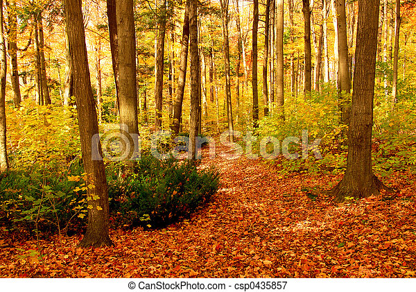 floresta, paisagem, outono - csp0435857