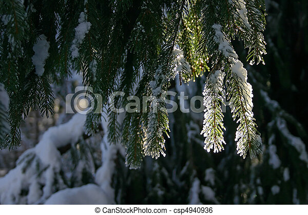 floresta, ramo, inverno - csp4940936