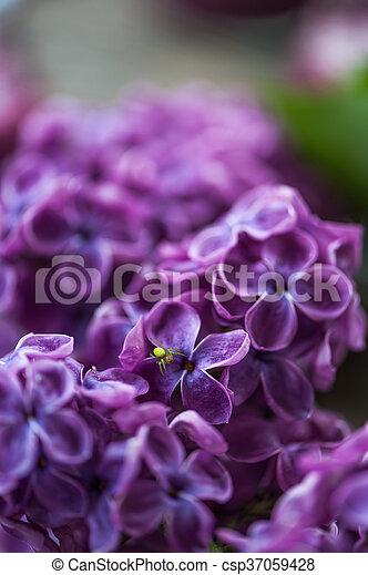 Araña en una flor lila - csp37059428