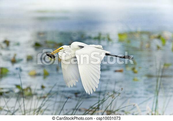 florida birds - csp10031073