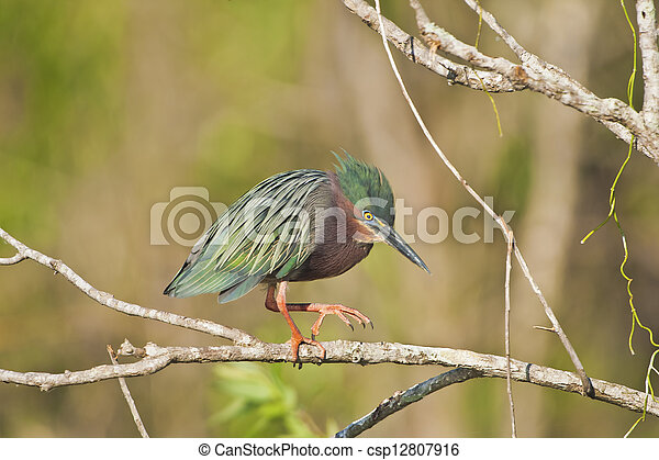 florida birds - csp12807916