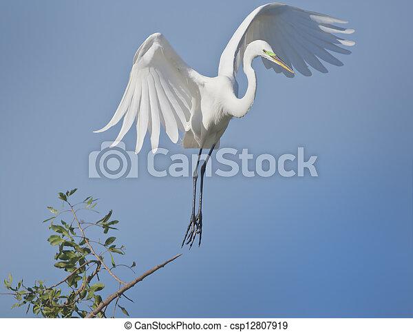 florida birds - csp12807919