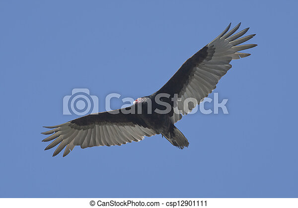 florida birds - csp12901111
