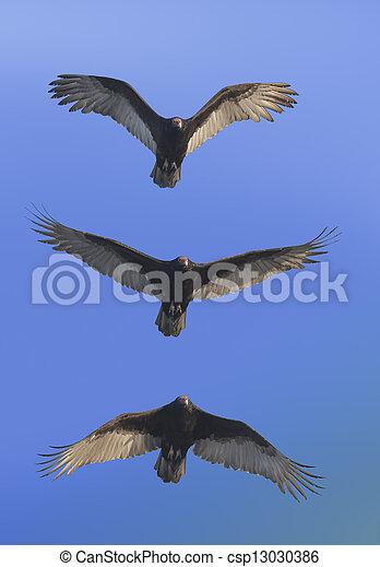 florida birds - csp13030386