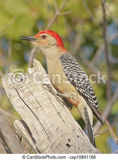 florida birds - csp10841166
