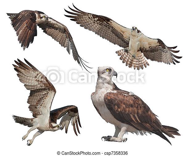 florida birds - csp7358336