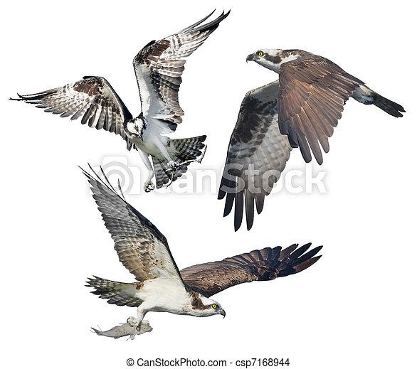 florida birds - csp7168944