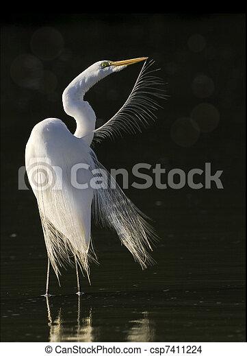 florida birds - csp7411224