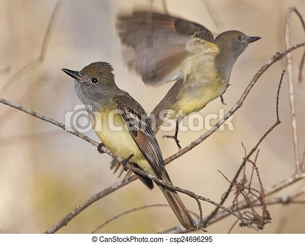 florida birds - csp24696295