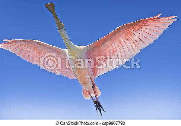 florida birds - csp9907790