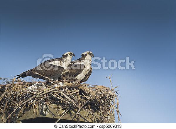 florida birds - csp5269313
