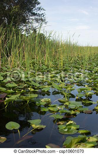 Florida Everglades - csp10601070