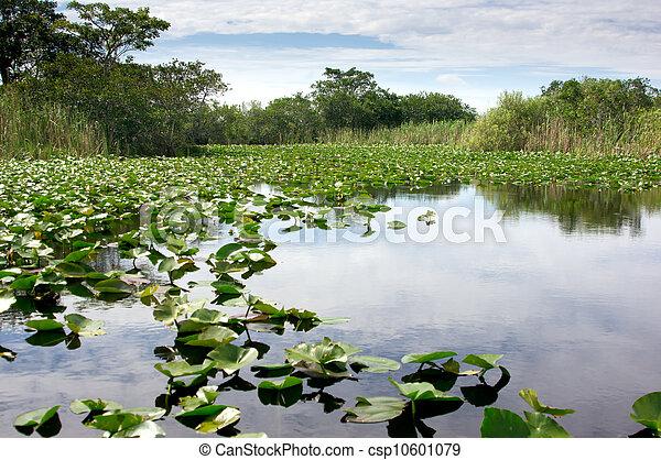 Florida Everglades - csp10601079