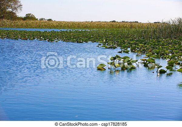 Florida Everglades - csp17828185