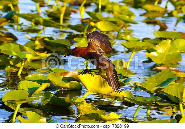 Florida Everglades - csp17828199